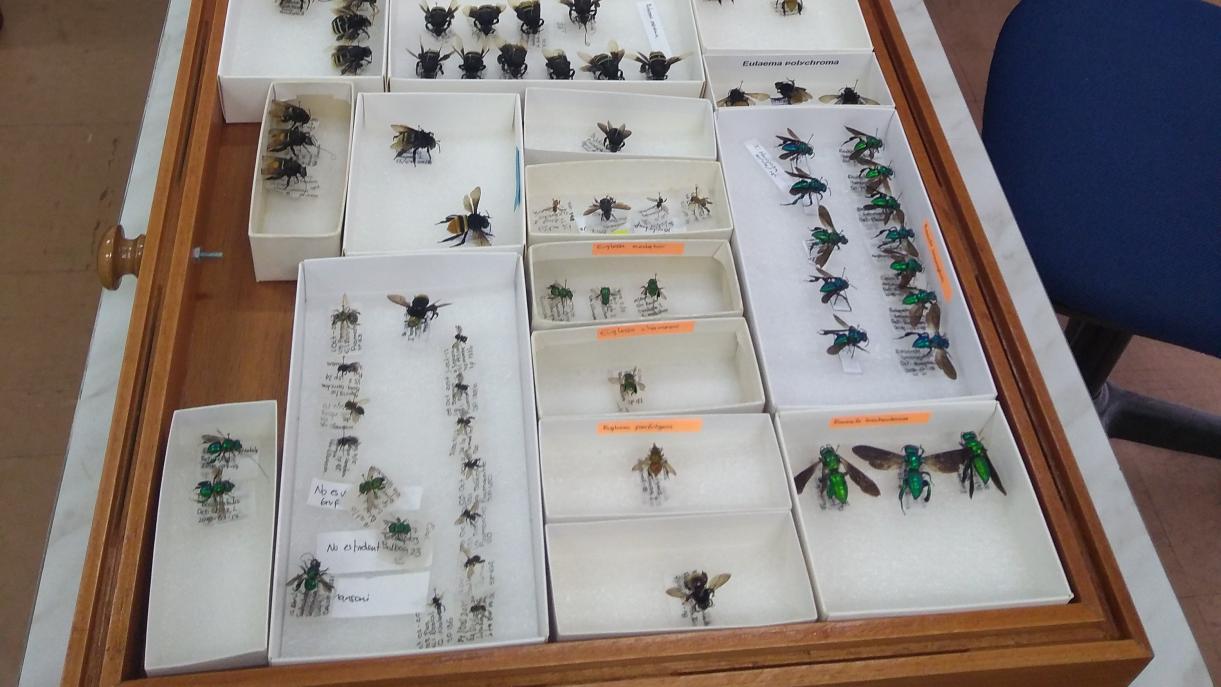 En el proyecto de Comunidades de insectos y caracterización molecular en áreas poco exploradas de las subzonas hidrográficas en la bota caucana.